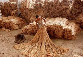 the-story-of-jute